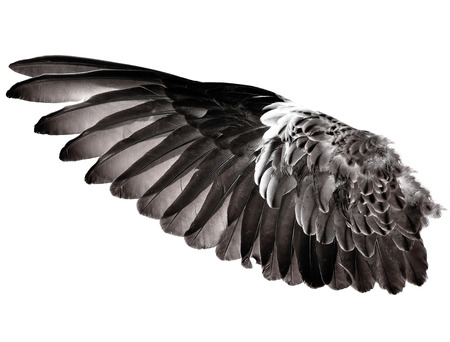 Wing feathers bird isolated on white background Stock Photo