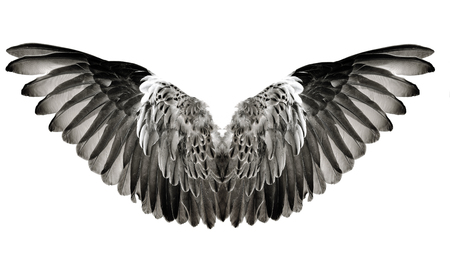Wing feathers couple isolated on white background Stock Photo