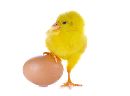hatched: One small yellow separated chicken and egg. Isolated on white.