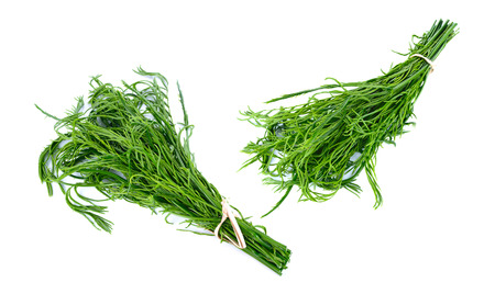 cha om: Acacia or Cha Om vegetable isolated on white background. this has clipping path. Stock Photo