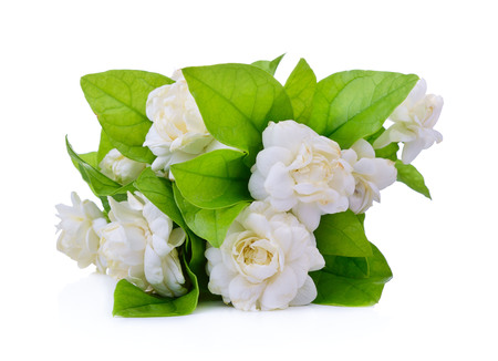 Jasmine flower fragrance isolated on white background.