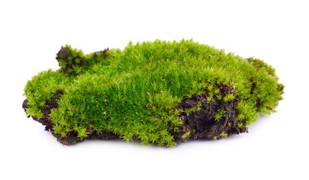 白 bakground に分離された緑の苔