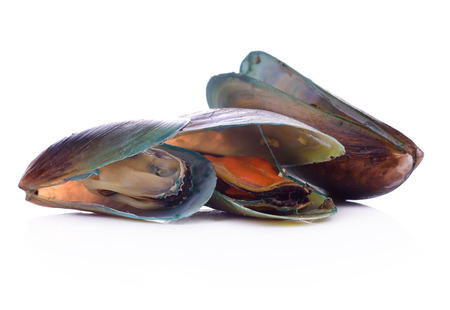 green mussel  isolated on White background. Stock Photo