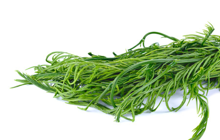 tang: Acacia or Cha Om vegetable isolated on white background. this has clipping path. Stock Photo