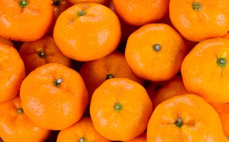 Kumquat is a bright orange background.