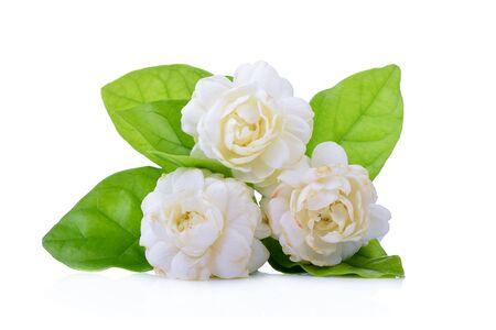 Jasmine flower fragrance isolated on white background. Stock Photo