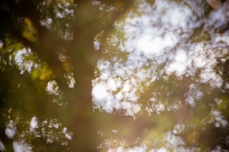 graden: Blur tree in graden Stock Photo