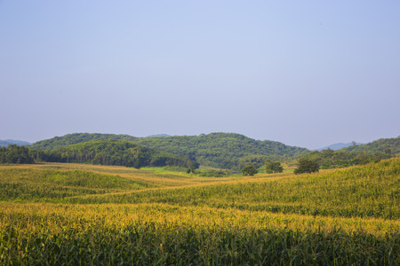 iowa agriculture: Corn field and Mountain