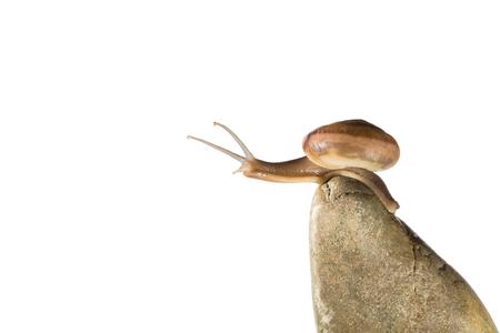Snail,snail crawling on the stone,snail on the stone,snail close-up