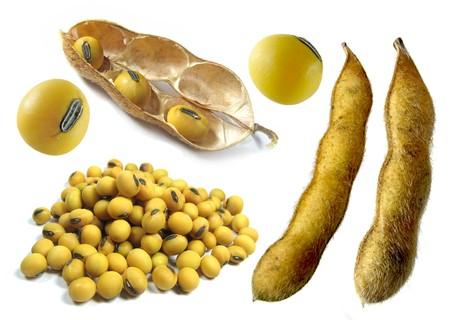 soya bean: Varias im�genes sobre maduras de soja, aislado en el fondo blanco Foto de archivo