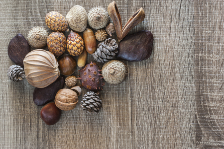 seeds of various: Various forest kernels and seeds