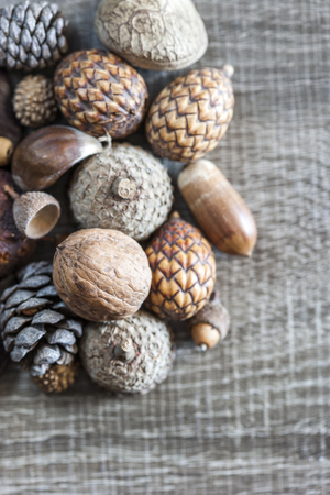 seeds of various: Various forest kernels and seeds. Selective focus image