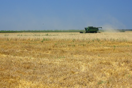 Combine reaps wheat crop in the field photo