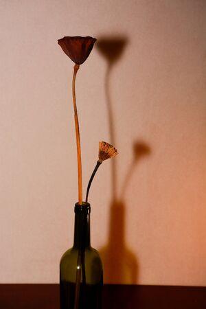Lotus and wine bottles