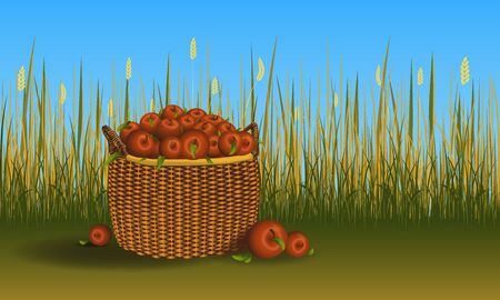 Basket with heap of apples on the ground. Field of cereal and grass on background. Vector image Ilustração