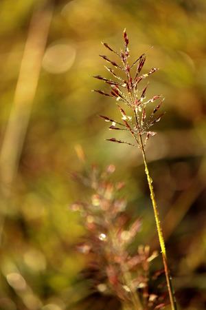 dewdrop: Grass with Dewdrop