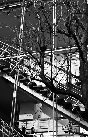 spiritless: Dispirited Tree with Stair Background