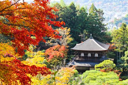 Colorful Autumn Leaves Ginkakuji Temple, Japan