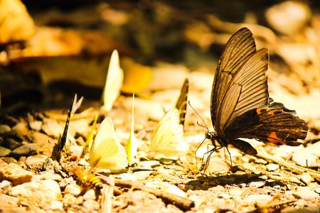 The Butterfly at Kaeng Krachan national park, Phetchaburi, Thailand Stock Photo
