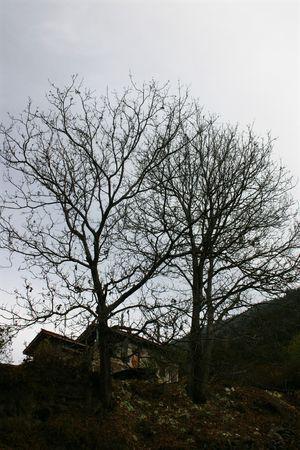두 나무 뒤의 혼자 티벳 집