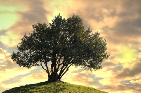 Olive tree on clouds at sunset background photo
