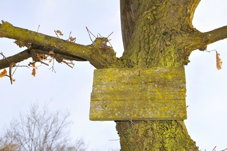 Signboard lichens and old trunk on clear sky Stock Photo