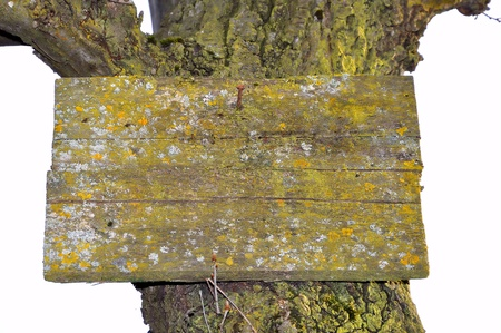 Signboard lichens and old trunk on white background Stock Photo