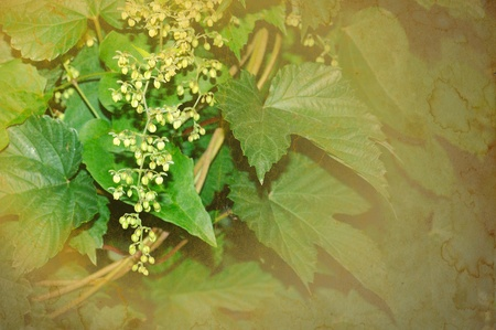 an inflorescence: Wild inflorescence background