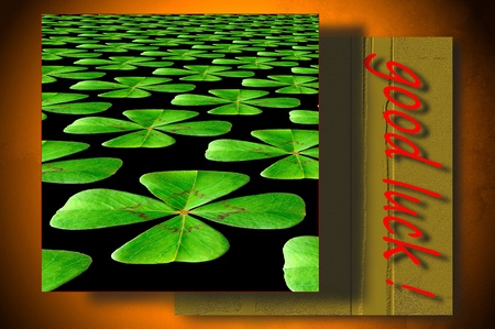 Four-leaf clover postcard photo