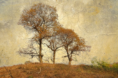 fall scenery: Vintage trees background Stock Photo