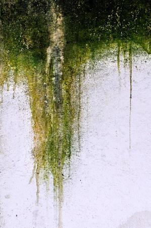 Mossy plaster
