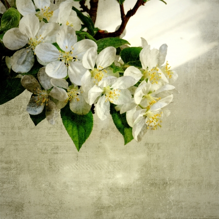 Vintage image of apple tree blossoming photo