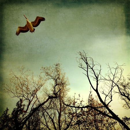 Pelican flying on the trees photo