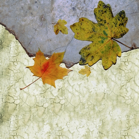 Yellow maple leaves on natural stone