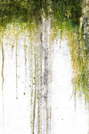 Mossy dripping plaster Stock Photo
