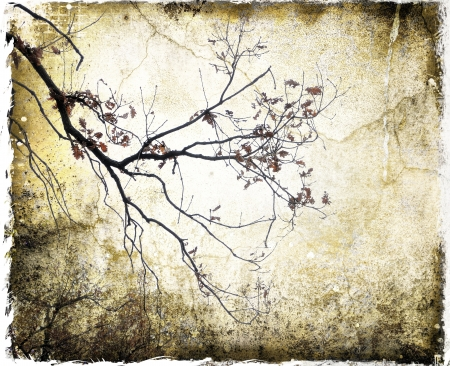 Grunge background with bare branches photo