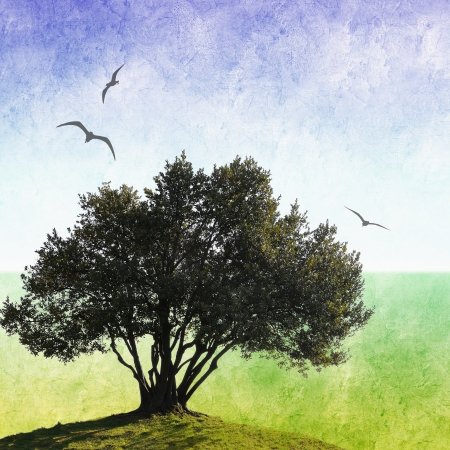 Grunge olive tree background with flying birds photo