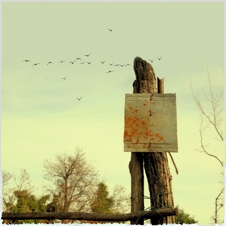Rusted blank sign with flock of birds photo