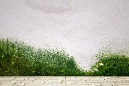 piso piedra: Suelo de piedra y paredes de yeso cubierto de musgo
