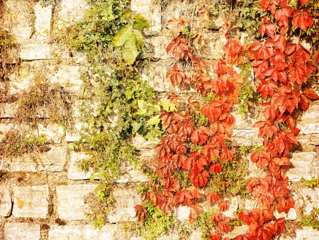 Vintage stone wall with autumnal red leaves. Stockfoto