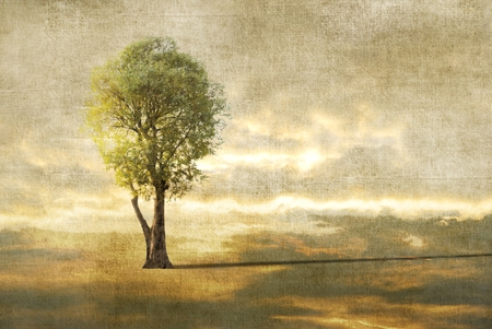 photographic effects: Surreal landscape with lonely tree. Sepia tones.