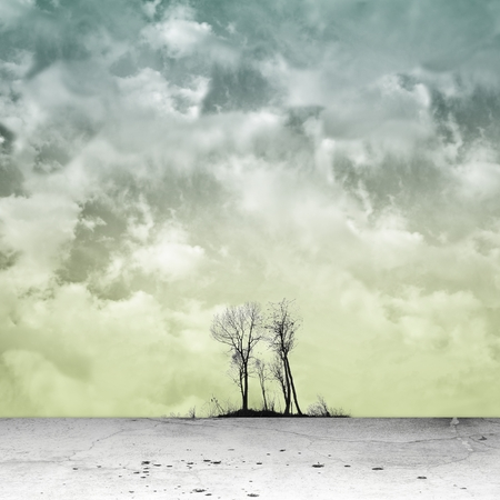 surreal landscape: Surreal landscape with bare group of trees