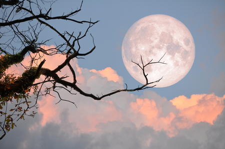 Bare tree on full moon at evening