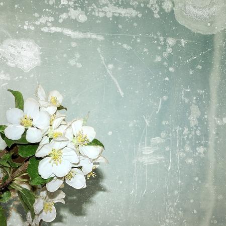 Fiori di melo d'epoca Archivio Fotografico
