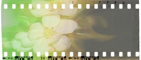 Marco de tira de película vintage con flores. Tonos verdes, blancos, amarillos y marrones.