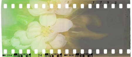 Vintage film strip frame with blossoms. Green, white, yellow and brown tones.