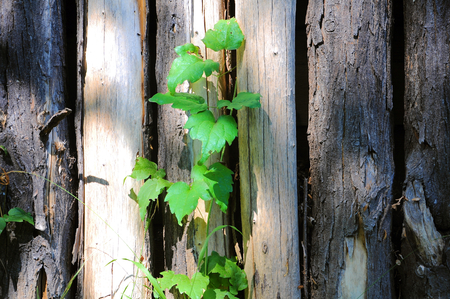 Wooden poles lined up with wild herbs. Stock Photo
