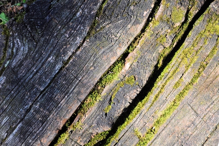 Old cracked wooden planks with moss. Stock Photo