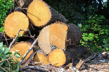 Pile of tree trunks cut in natural environment. Stock Photo