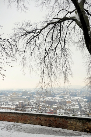 Old bare hackberry tree with view on the city of Brescia, Italy. Winter background.